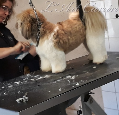 L'Art Canin - Galerie photos